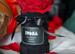flower box dehidrina, večna ruža